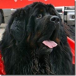 DOG CHINA-