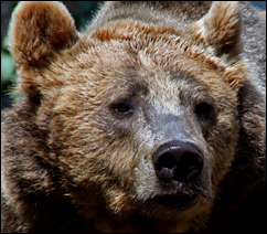 burnbjörn1