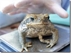 toad11