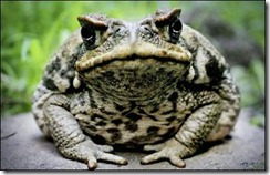 toad-a-a-a