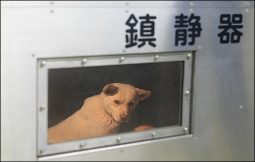 JAPAN-DOGS