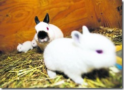 kaniner-