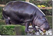 hippo.arp