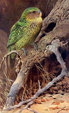 Resultado de imagen para kakapo historia