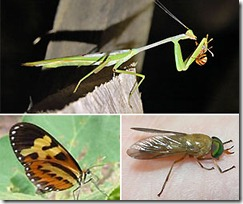insetos_2