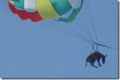 Parasailing-donkey-russia-280x186