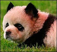 pandaDog_reuters_597937t