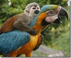 Mono-y-papagayo