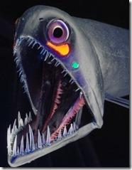 pez-dragon2