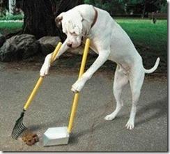 hund-plockar-bajs_68538220