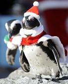 Pingüinos celebraron la Navidad en Yokohama