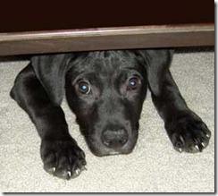 scared_dog.