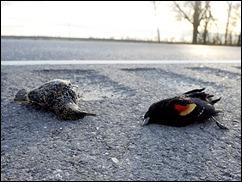 LOUSIANA alg_the-birds