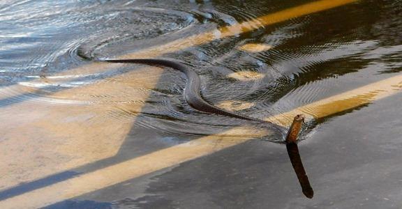 australia orm