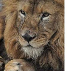 bolivia leones