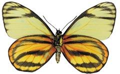 mariposas_nuevas