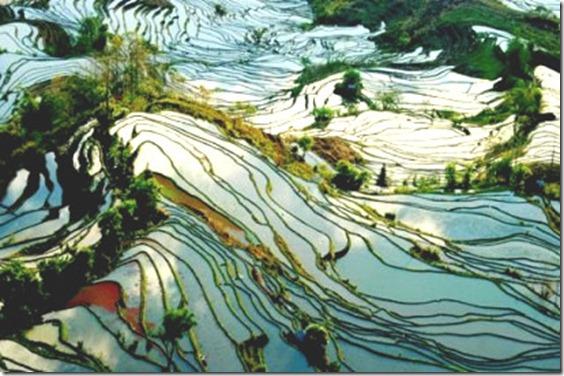 yuanyang-rice-terrace1