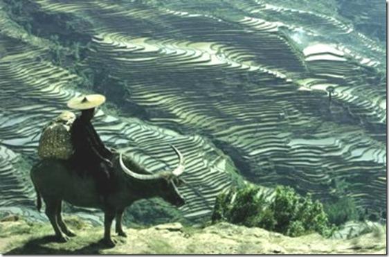 yuanyang-rice-terrace3
