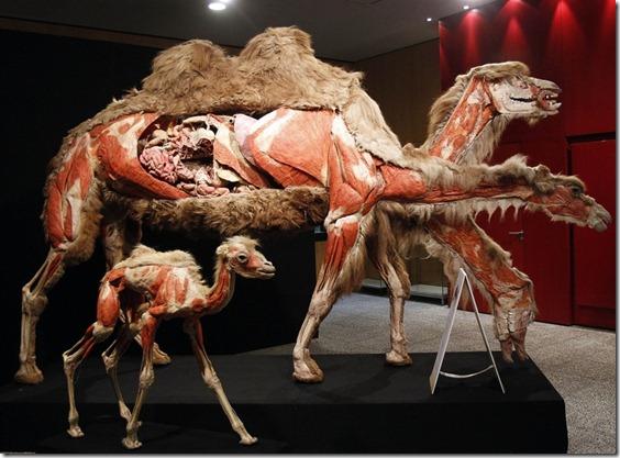 KÖRPERWELTEN DER TIEREN animals-exhibit-03.photoblog900