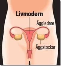 Skärmavbild livmodern