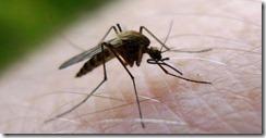 Mucho mosquito este verano