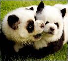 perros china1