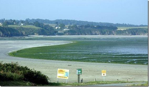 Alga  Morieux