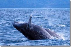 maravilloso-espectaculo-en-costas-ecuatorianas-8