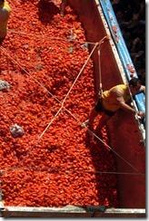 España vive su fiesta de la Tomatina