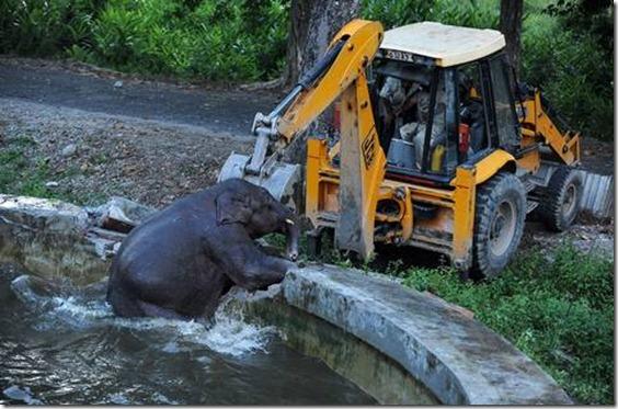 Elefante recibe ayuda en Bengdubi, India