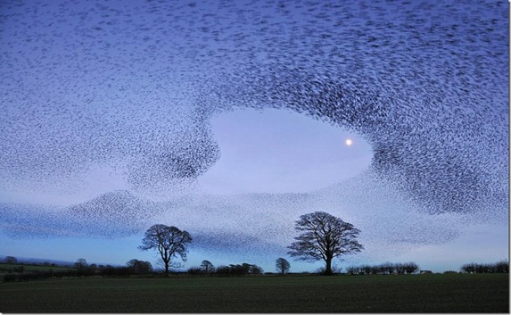 Gretna Green Starlings