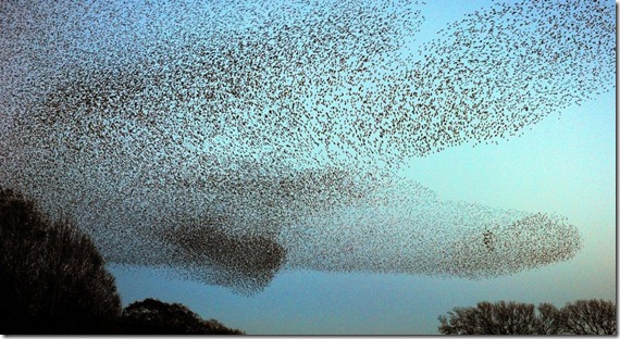 STARLINGS GRETNA ESCOCIA