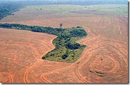 Alertan crecimiento del 52% de desforestación en la Amazonia