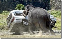 elefante ataca en Jarkhand India
