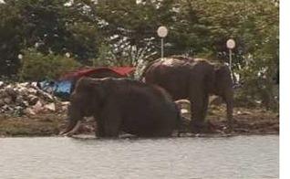 elefantes varados-