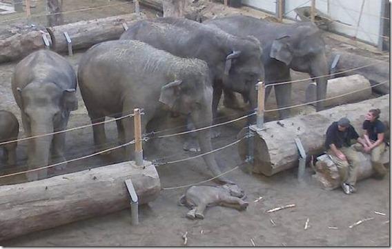 El adiós de los elefantes a Lola