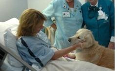Autorizan a un perro a visitar a su amo en el hospital