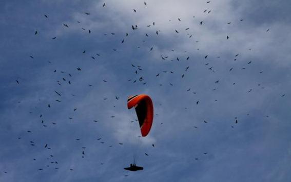 Miles de gavilanes cruzan el cielo