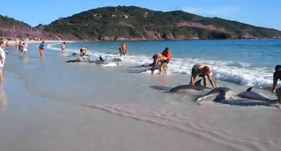 Golfinhos encalham em praia de Arraial de Cabo