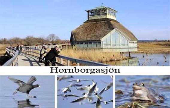 hornborgasjon_5_