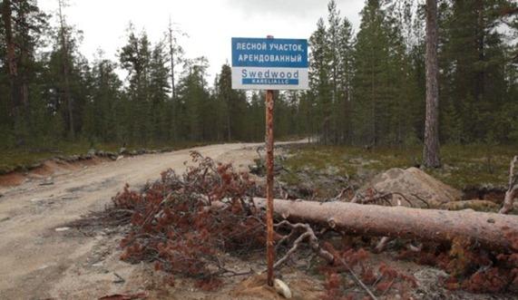 Ikea tala bosque primario ruso