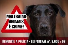 MATRTAR ANIMAIS-