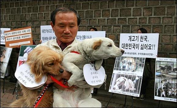 동물사랑실천협회, 한국동물보호연합 회원들은 25일 낮 서울 서소문 시청 별관앞에서 '개를 가축화하여 개고기를 위생관리하겠다'는 서울시의 개고기 합법화 정책을 규탄하는 시위를 벌였다.