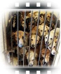 AYANDENA: El número de perros abandonados aumenta con la llegada del verano y la crisis