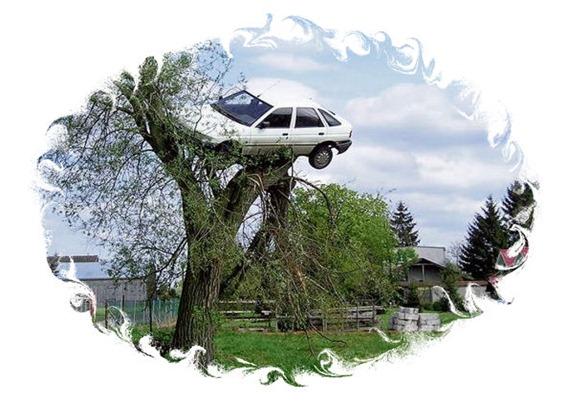 coche en el árbol
