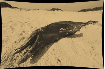 El paraíso perdido de los delfines