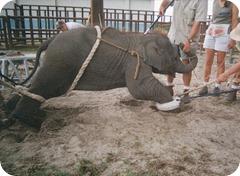 Colombia aprueba proyecto que prohíbe uso de animales en circos