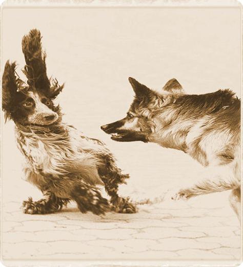 Si tu perro es agresivo, a lo mejor le duele algo