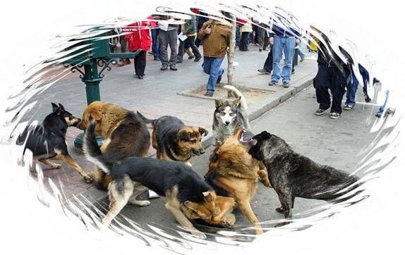 perros vagos CHILE