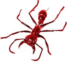 bullet ant-